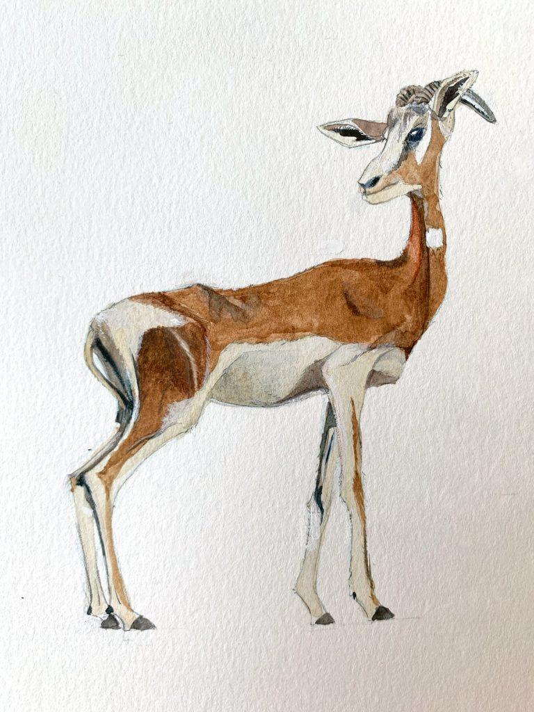 Gazelle de Mhorr (1)